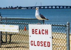 A seagull on the fence above a beach closed sign by the bay side in Surf City on Long Beach Island along the Jersey shore.